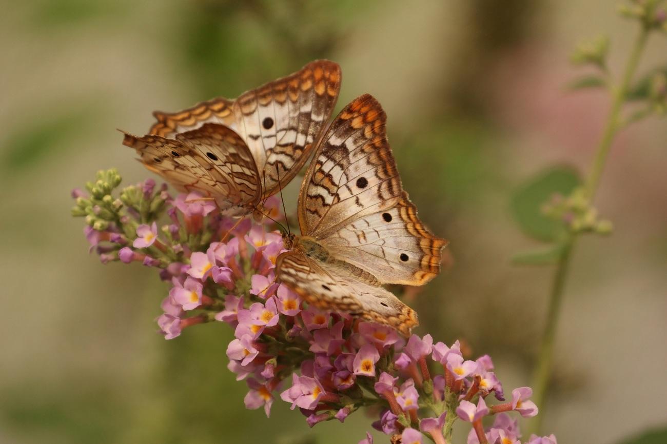 butterfly-743549