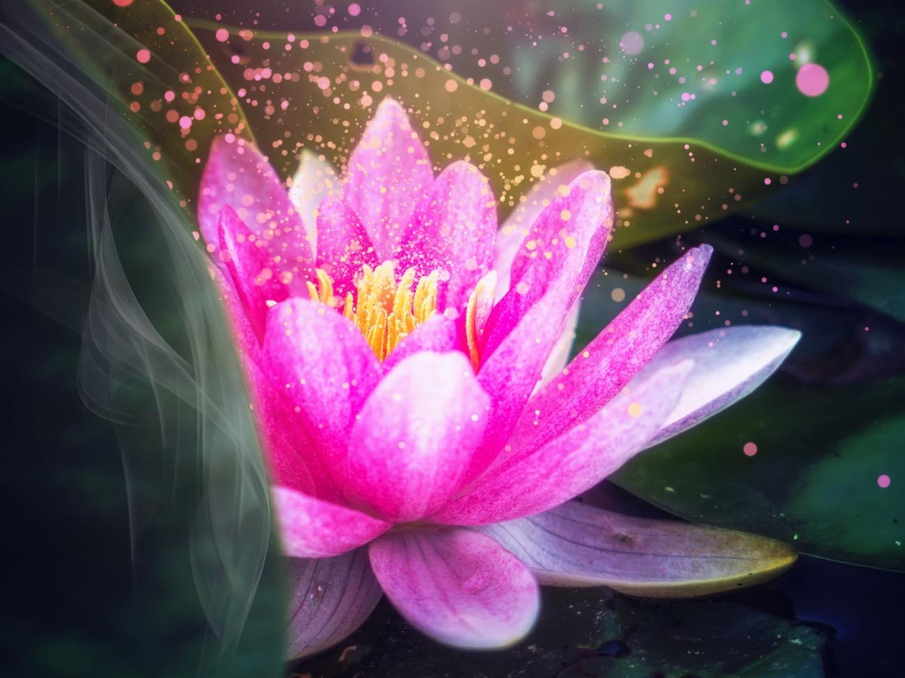 lotus-3231910_1920